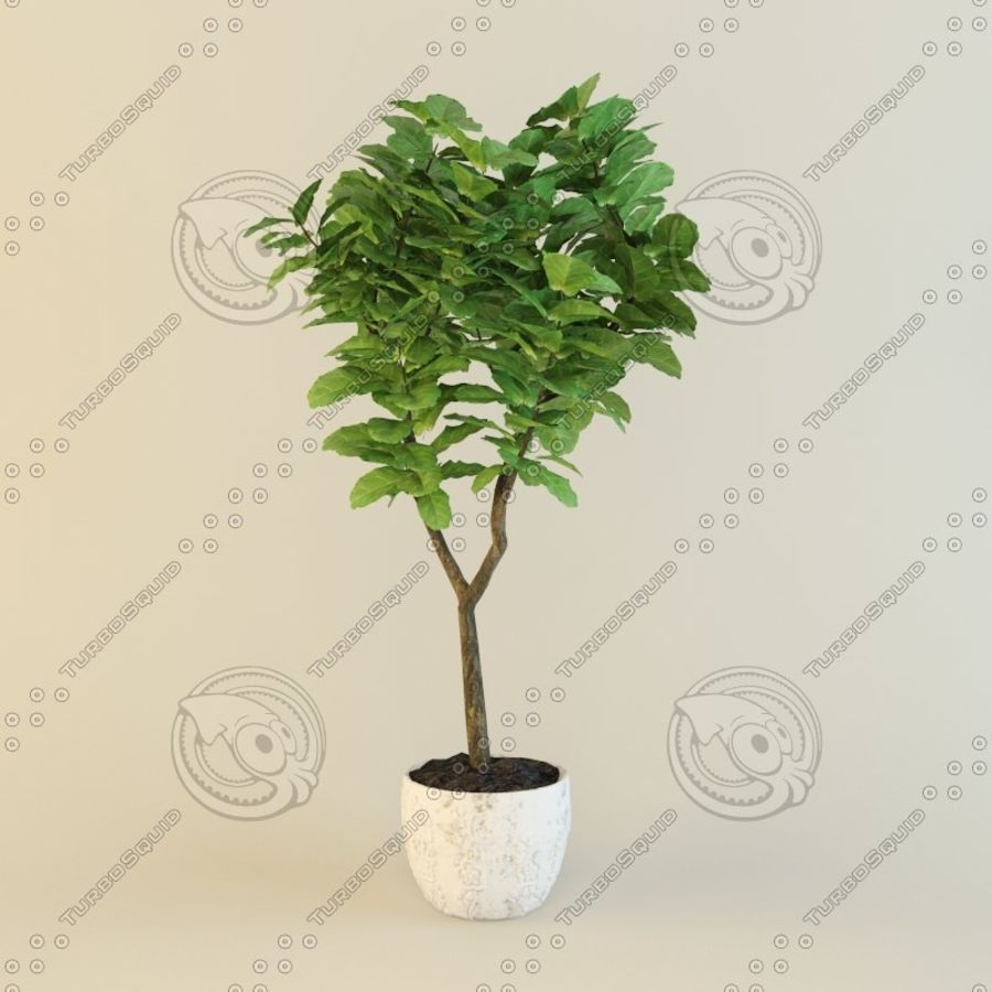 Ficus plant royalty-free 3d model - Preview no. 1