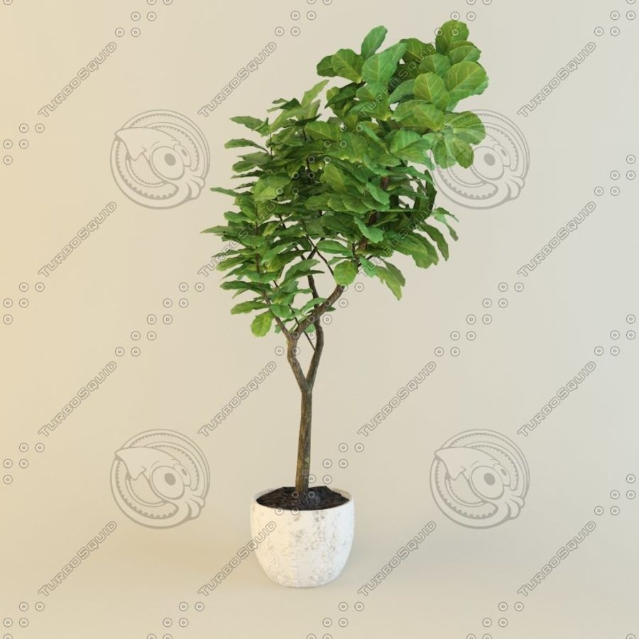 Ficus plant royalty-free 3d model - Preview no. 6