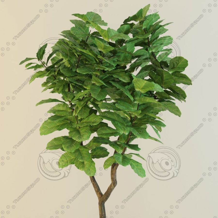 Ficus plant royalty-free 3d model - Preview no. 5