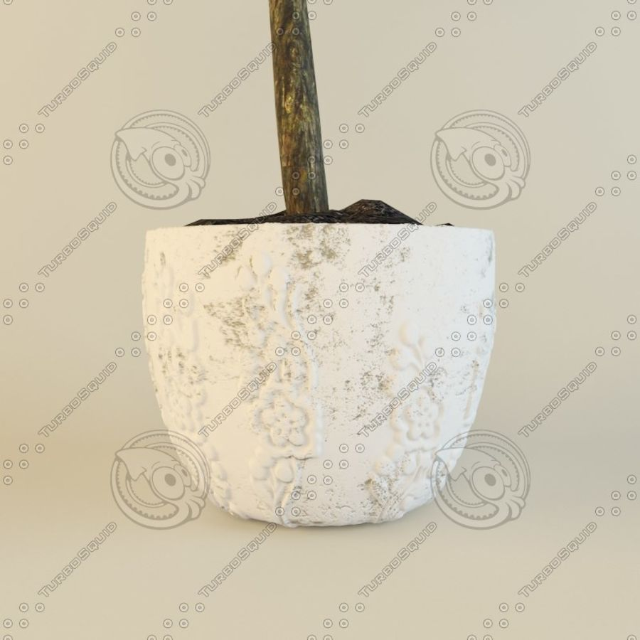 Ficus plant royalty-free 3d model - Preview no. 3