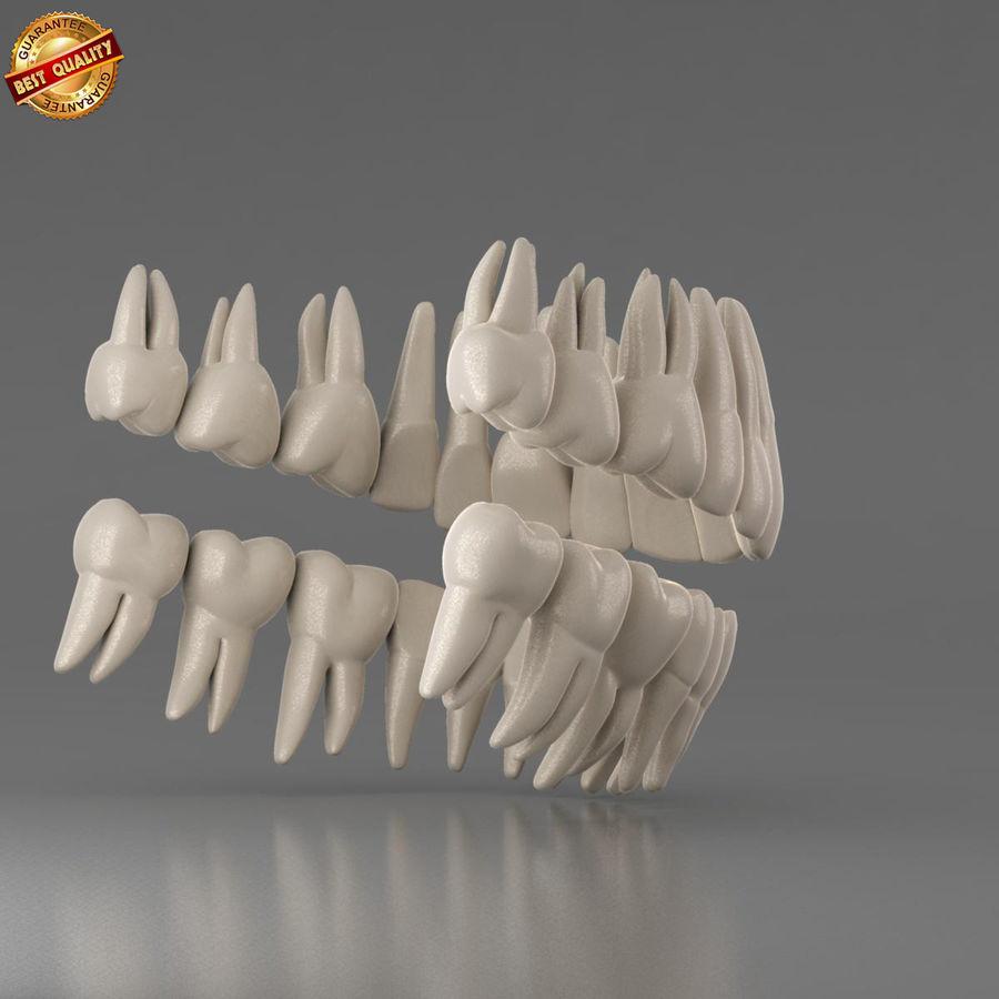 Ludzkie zęby royalty-free 3d model - Preview no. 5