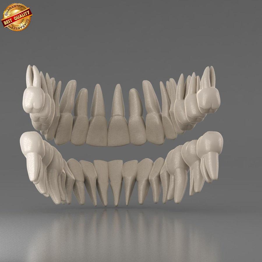 Ludzkie zęby royalty-free 3d model - Preview no. 6