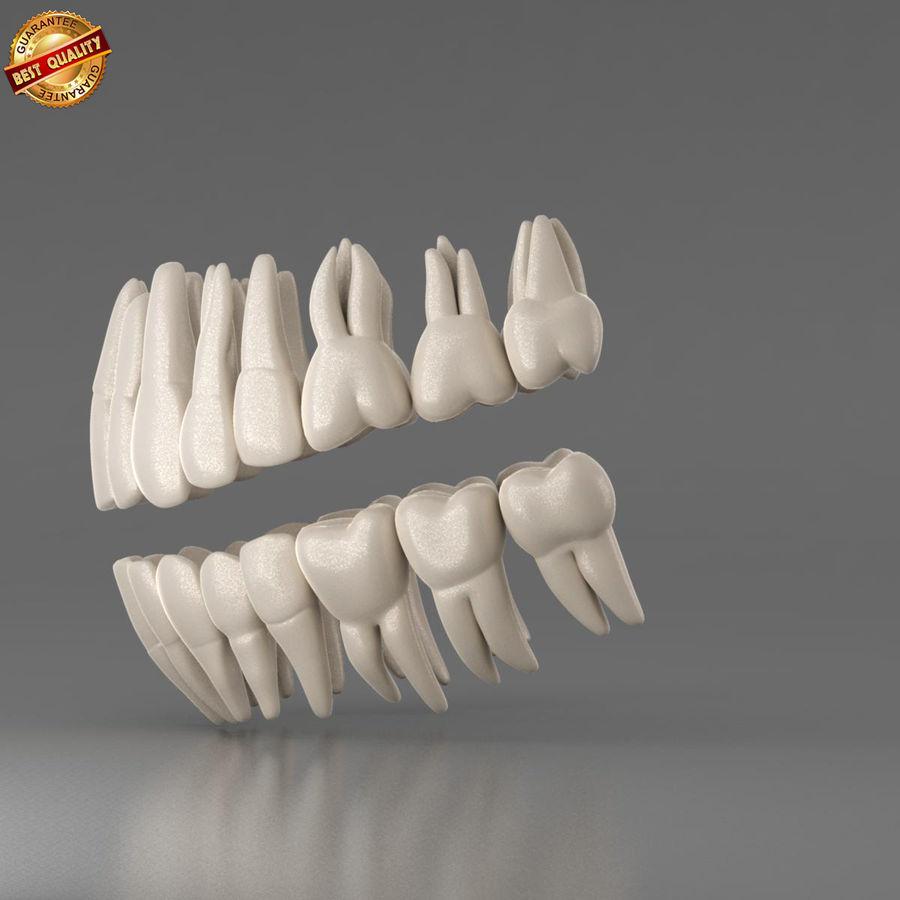 Ludzkie zęby royalty-free 3d model - Preview no. 8