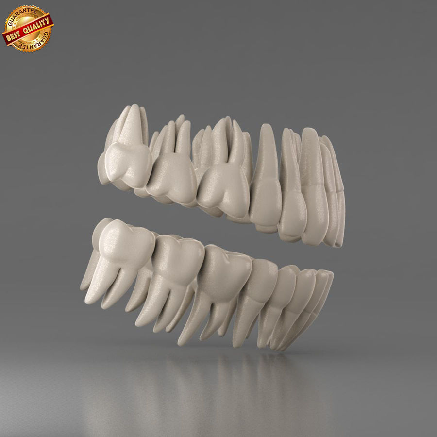 Ludzkie zęby royalty-free 3d model - Preview no. 4