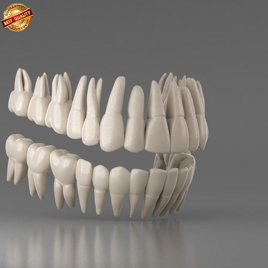 Ludzkie zęby royalty-free 3d model - Preview no. 2