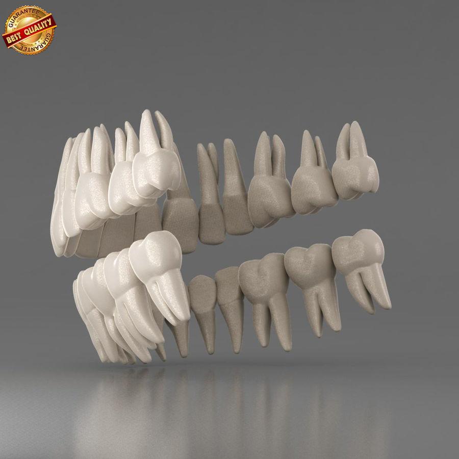 Ludzkie zęby royalty-free 3d model - Preview no. 7