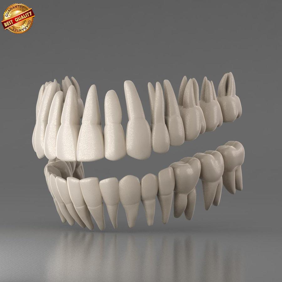Ludzkie zęby royalty-free 3d model - Preview no. 1