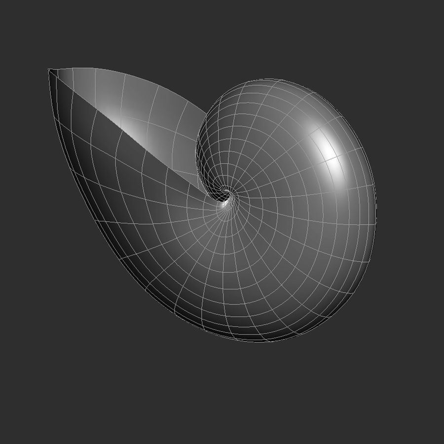Nautilus Shell royalty-free 3d model - Preview no. 5