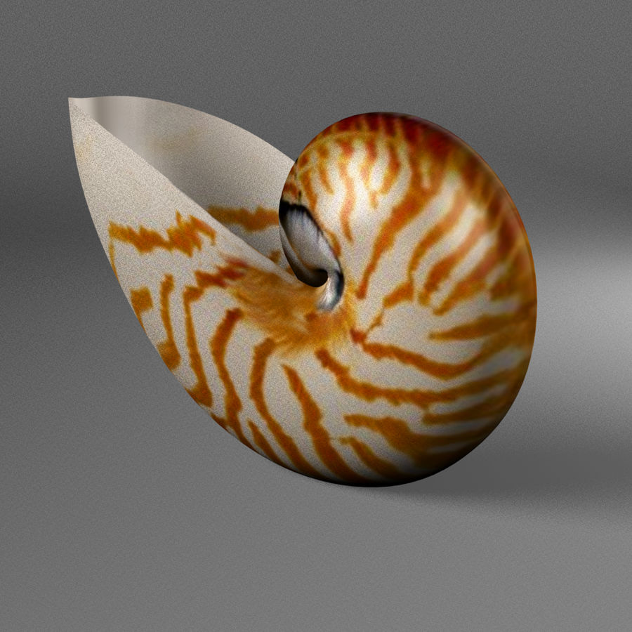 Nautilus Shell royalty-free 3d model - Preview no. 4
