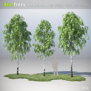 ArchTrees Birch collection 3d model