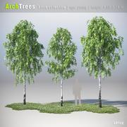 ArchTrees Birch koleksiyonu 3d model