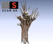 柳树雪(2) 3d model