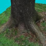 Souche d'arbre 6 3d model