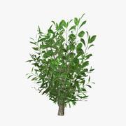 plant_11 3d model