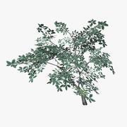 plant_12 3d model