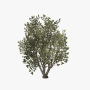 plant_14 3d model