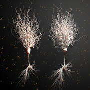 Ultra Realistic Detailed Neurons 3d model