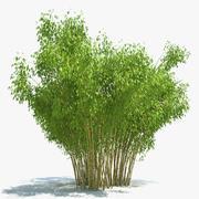 Goldenes Bambus-Set 3d model