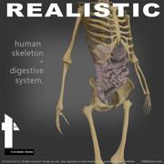 Human Digestive & Skeletal System 3d model