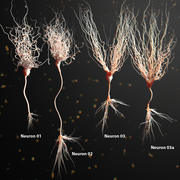 Three Neuron Package Realistic Anatomy 3d model