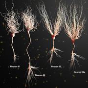 Three Neuron Package Realistic Anatomy 3d model