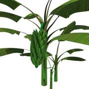 オオバコの植物 3d model