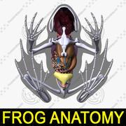 Frog Anatomy 3d model