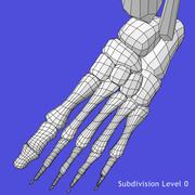 Szkieletowe nogi 3d model