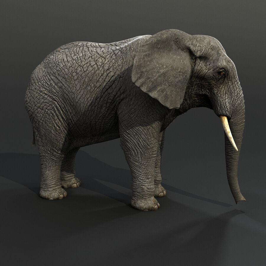 Éléphant gréé royalty-free 3d model - Preview no. 7