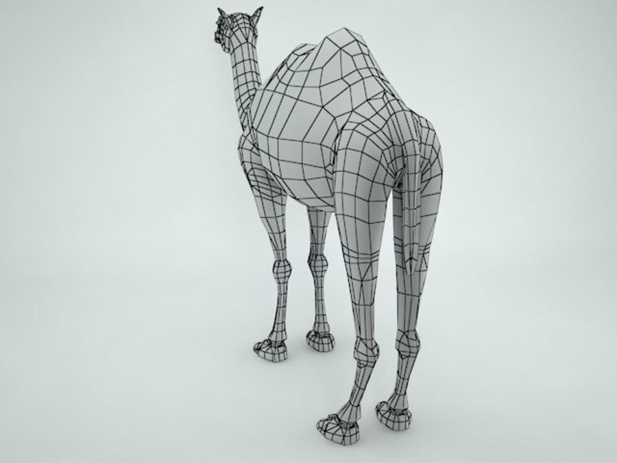 cammello royalty-free 3d model - Preview no. 13