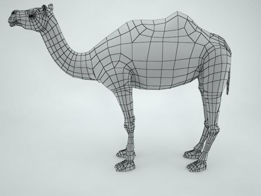 cammello royalty-free 3d model - Preview no. 10
