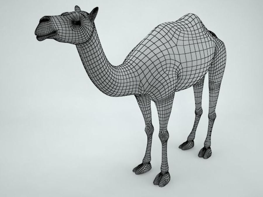 cammello royalty-free 3d model - Preview no. 12
