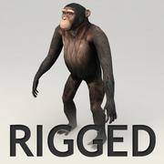 Chimpanzee Rigged Modell 3d model