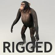 Modelo de Chimpanzé Rigged 3d model