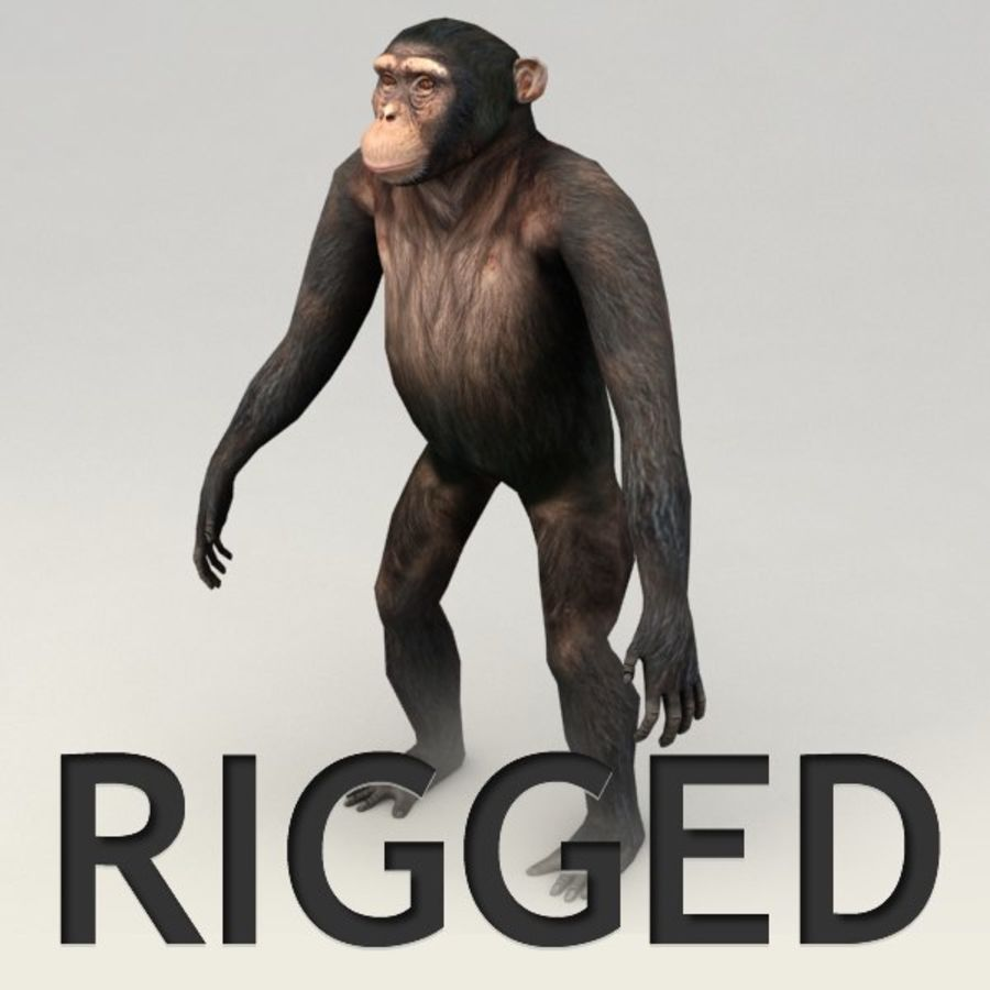 Chimpanzee Rigged Model royalty-free 3d model - Preview no. 1