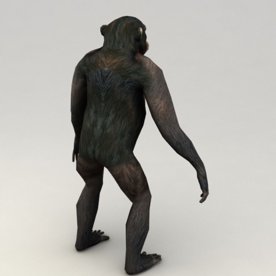 Chimpanzee Rigged Model royalty-free 3d model - Preview no. 3