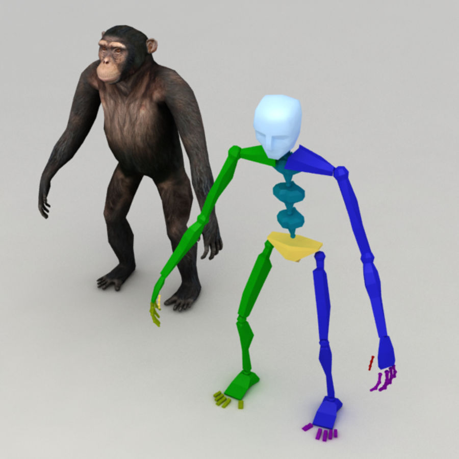 Chimpanzee Rigged Model royalty-free 3d model - Preview no. 6