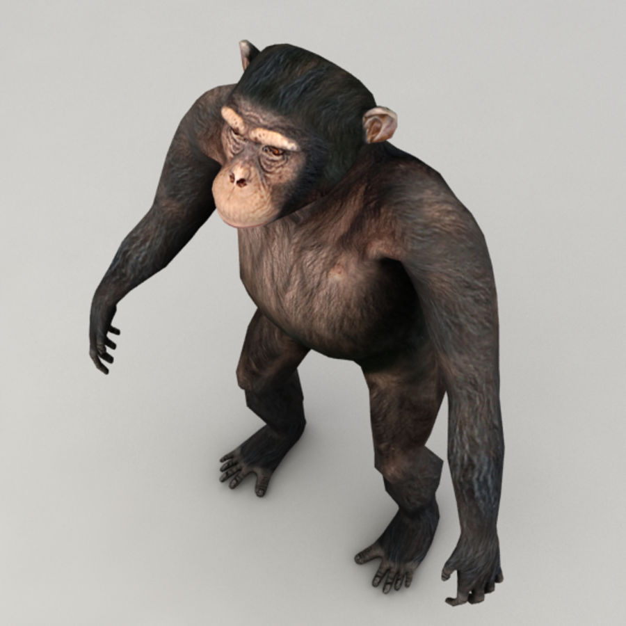 Chimpanzee Rigged Model royalty-free 3d model - Preview no. 4