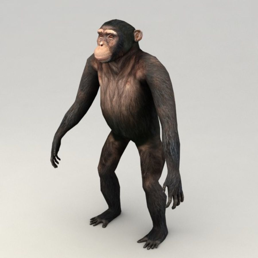 Chimpanzee Rigged Model royalty-free 3d model - Preview no. 2