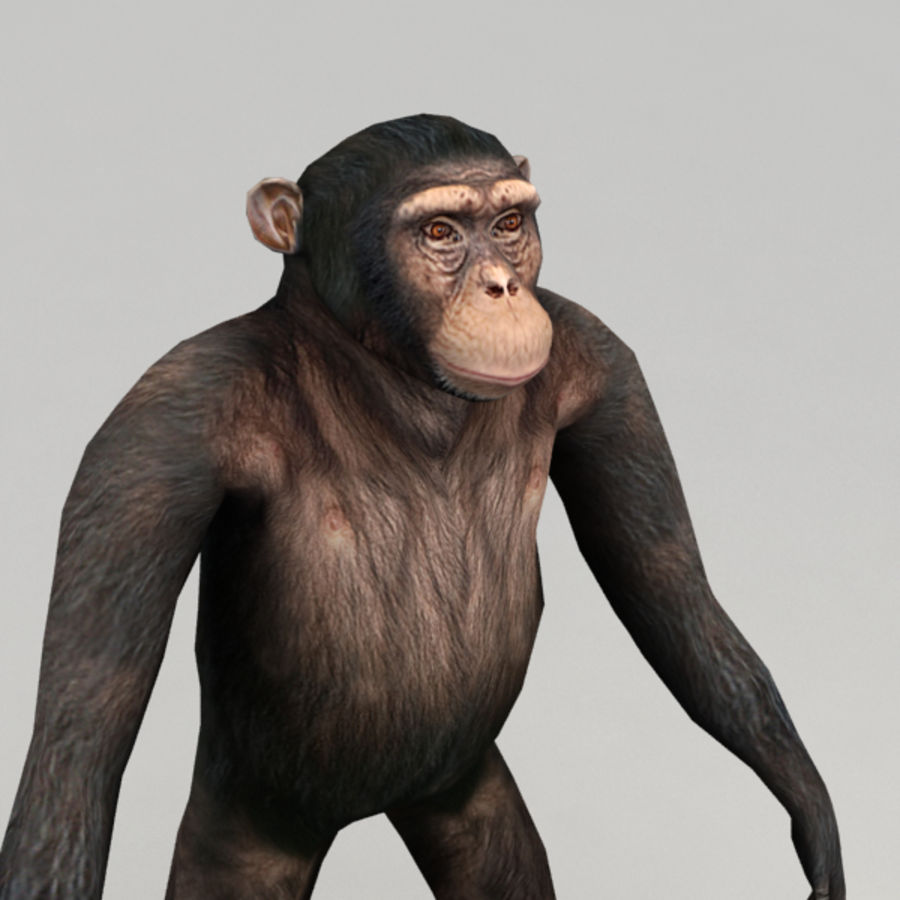 Chimpanzee Rigged Model royalty-free 3d model - Preview no. 5