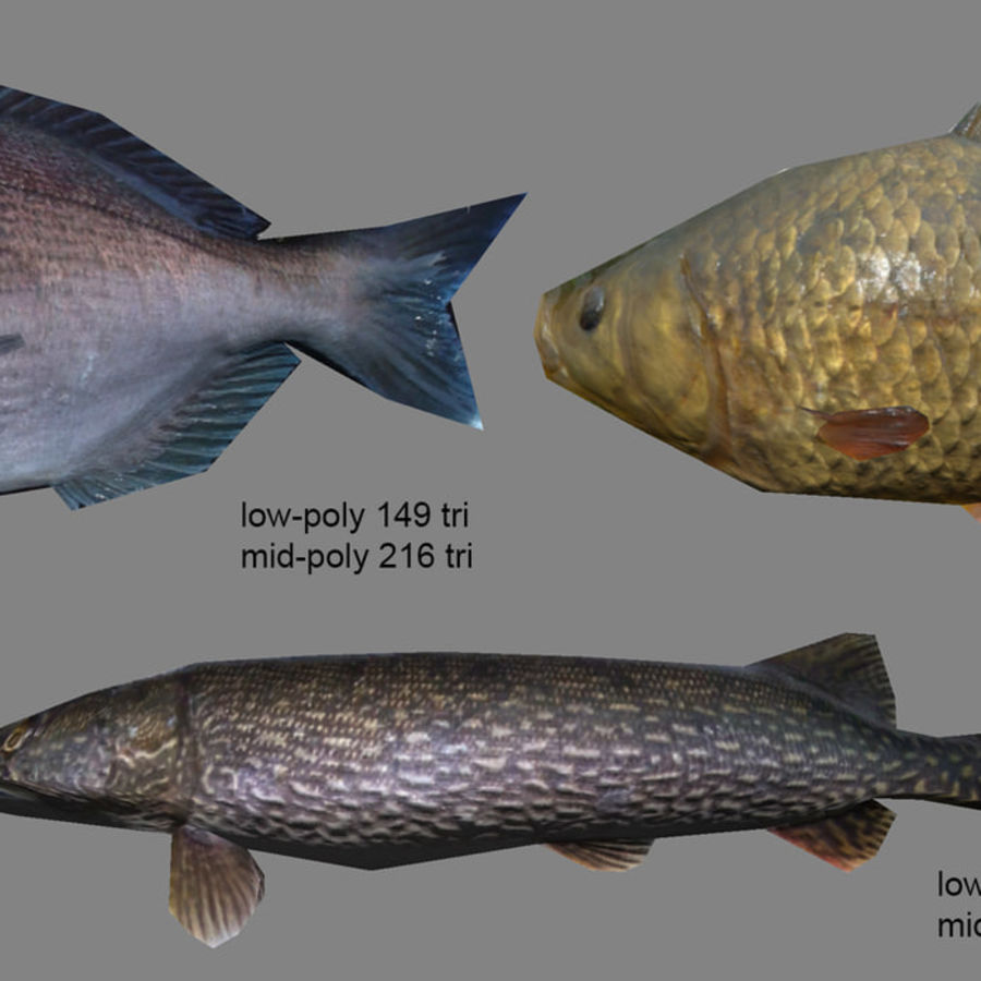 Animated fish and props royalty-free 3d model - Preview no. 4