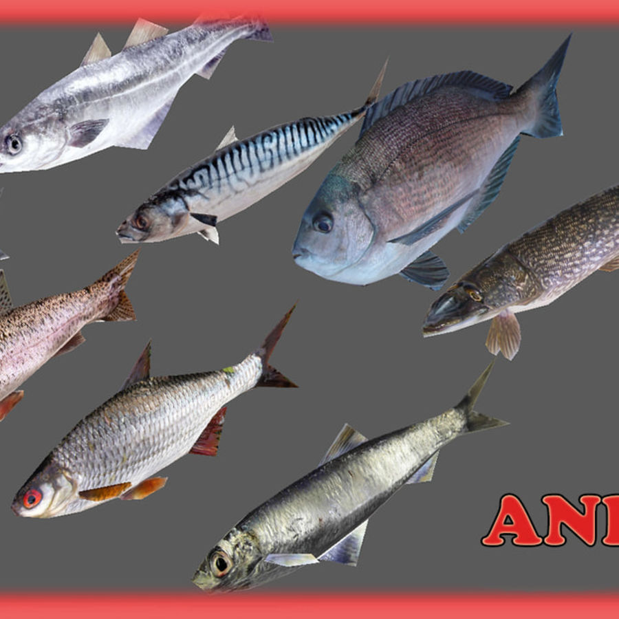 Animated fish and props royalty-free 3d model - Preview no. 1