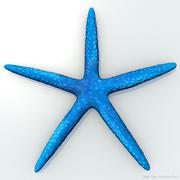 Blauwe zeester 3d model