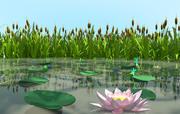沼泽植物 3d model