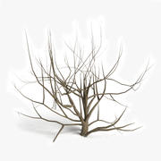 Arbusto Morto 1 3d model