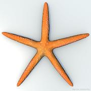 オレンジ色のヒトデ 3d model