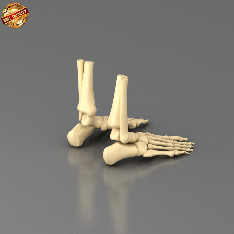 Foot Skeleton royalty-free 3d model - Preview no. 5
