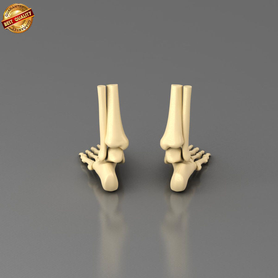 Foot Skeleton royalty-free 3d model - Preview no. 6
