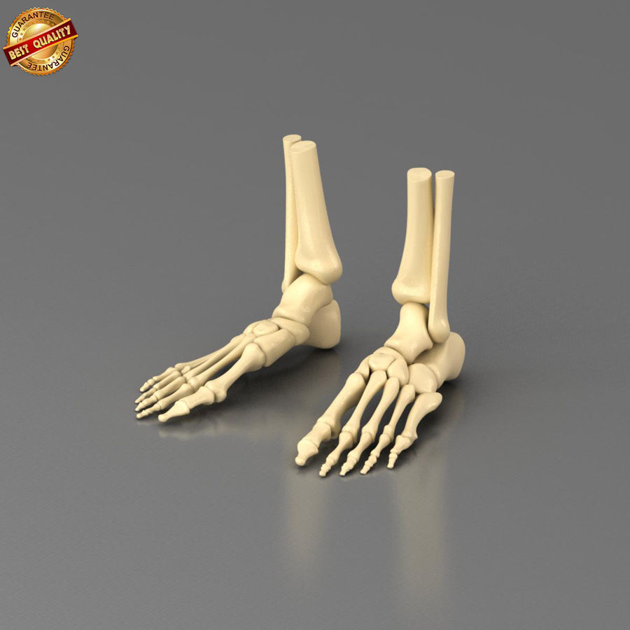 Foot Skeleton royalty-free 3d model - Preview no. 1