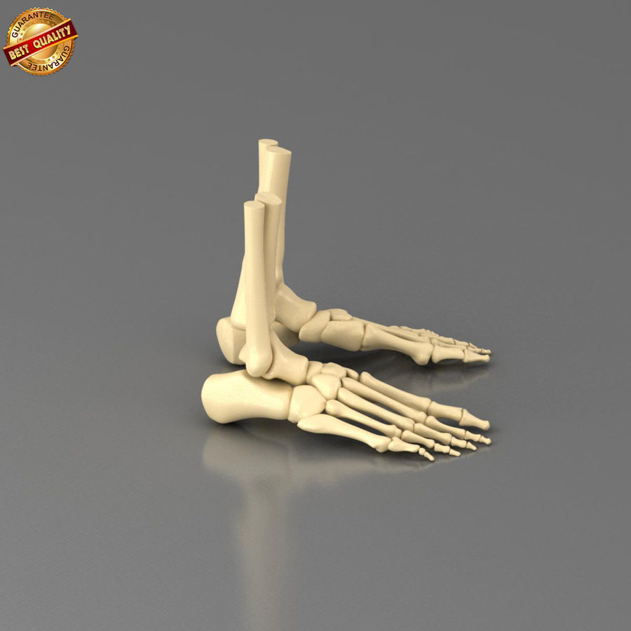 Foot Skeleton royalty-free 3d model - Preview no. 4